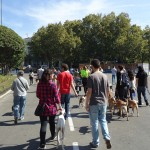 VII Quedada de Perros Viajando por Madrid