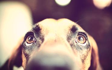 pic_dog_sitting