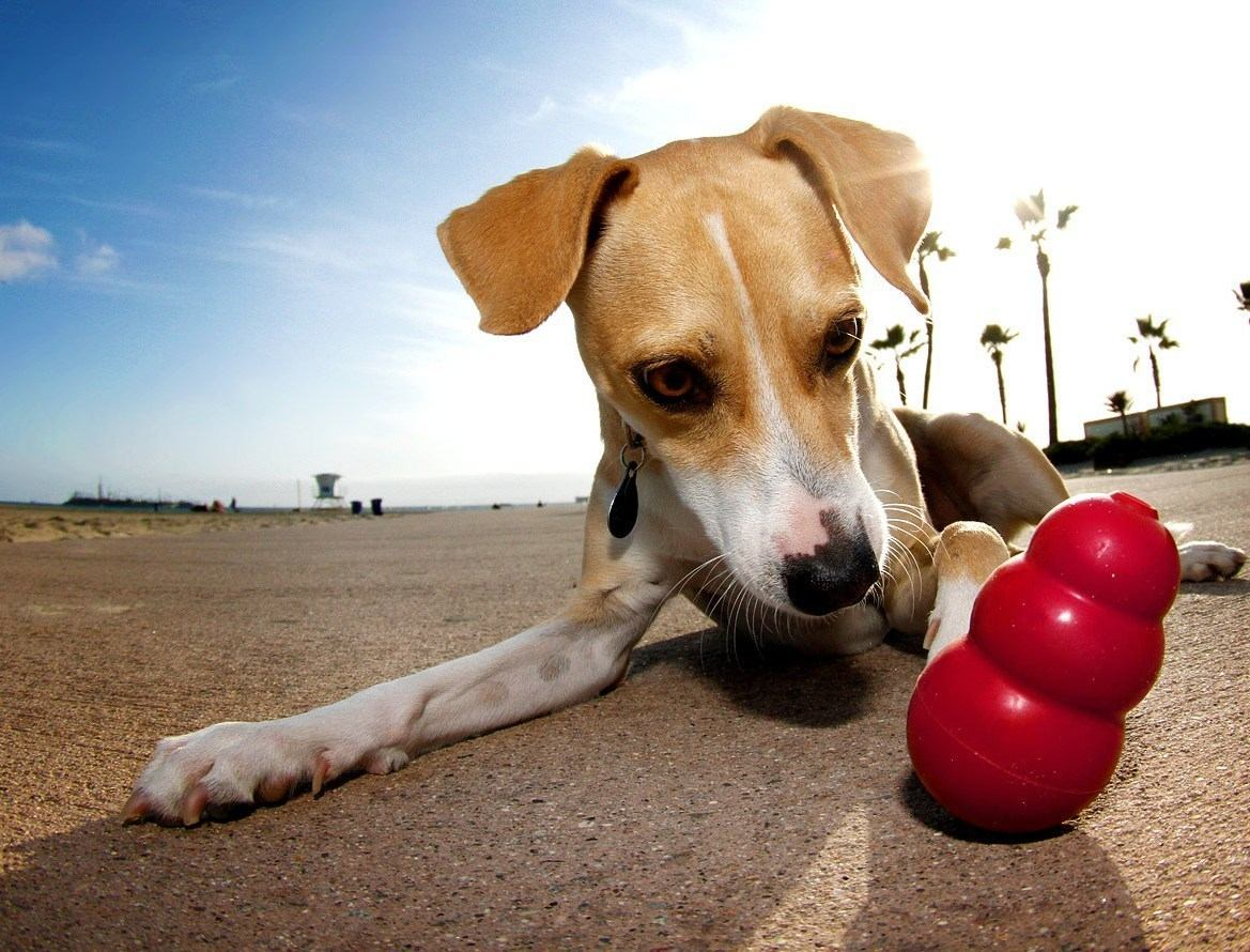 juguete-para-perro-kong-clasico-mediano-mdm-3338-MLM4155564714_042013-F