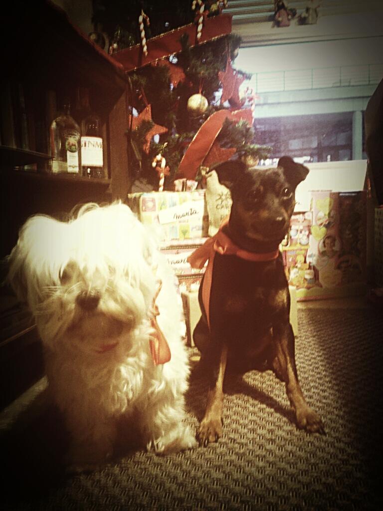Marco y Toby