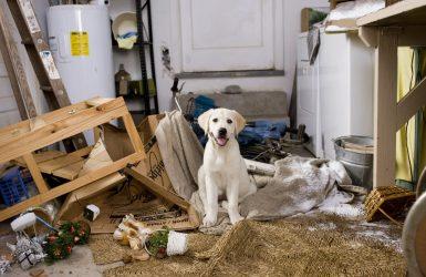 cuidador de perros gudog
