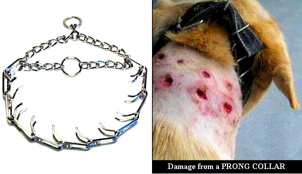 Can Dogs Escape Prong Collar