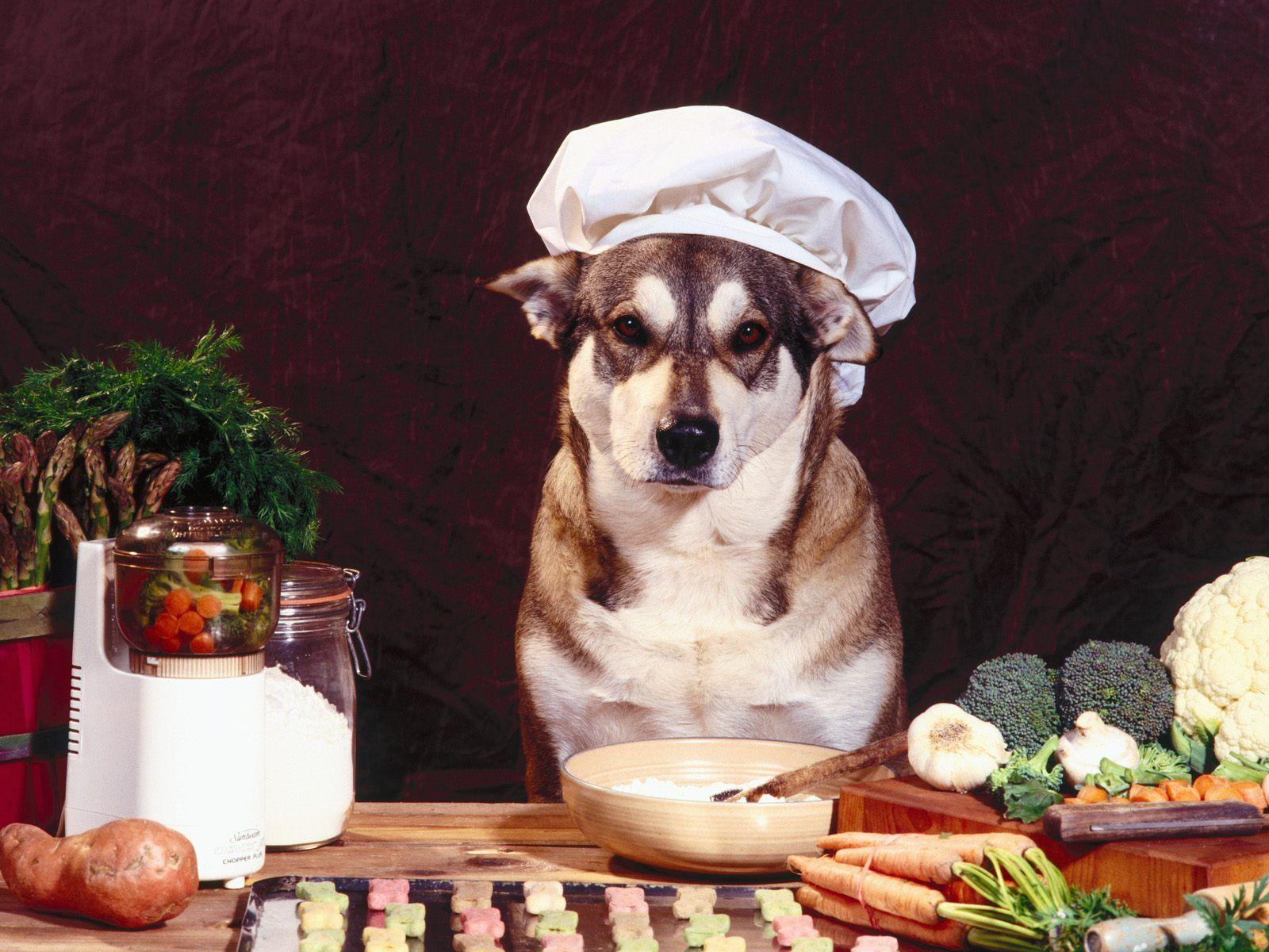 comida-natural-para-perros