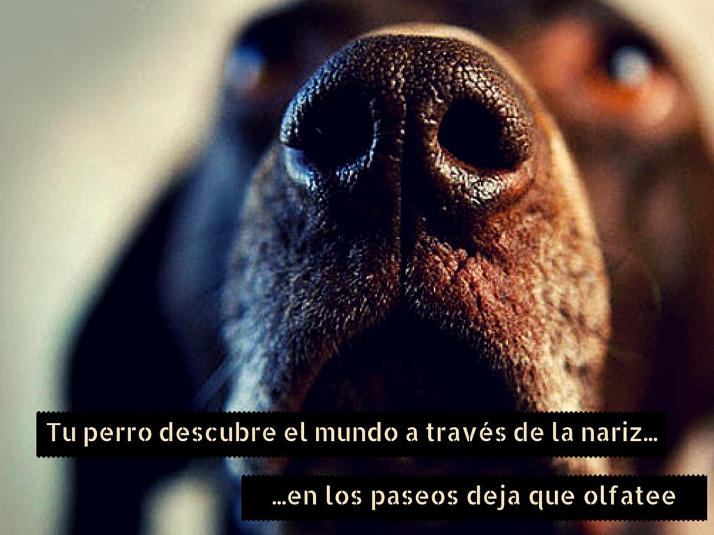 perro_no_tire_de_la_correa