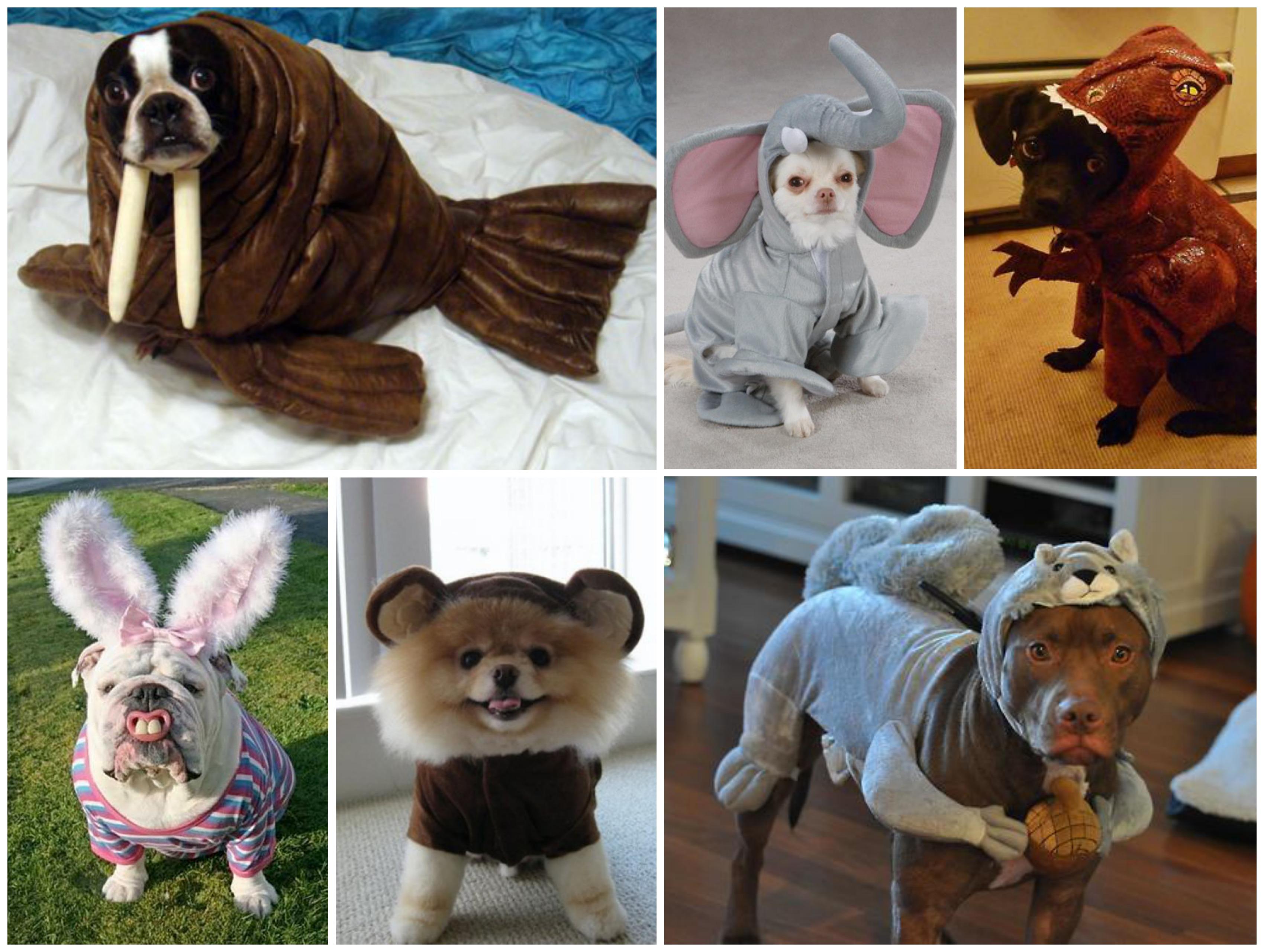 chiens déguisés Halloween