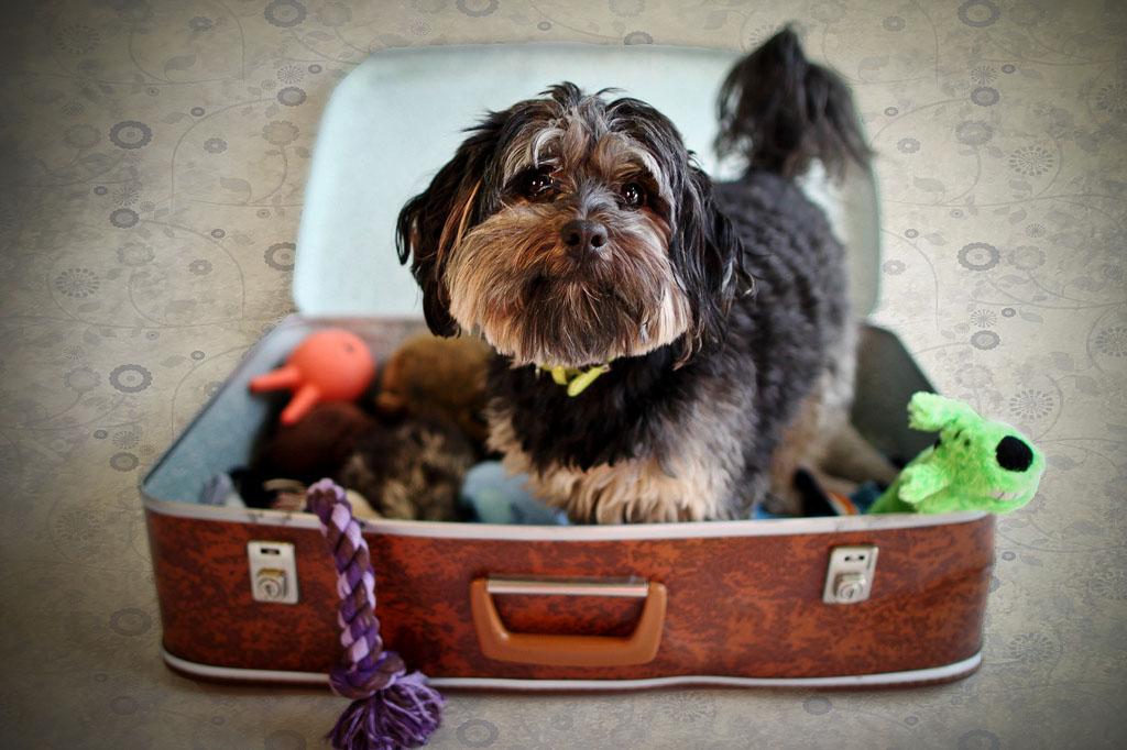 viajar_con_perro