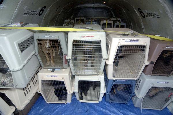 viajar_avion_perro