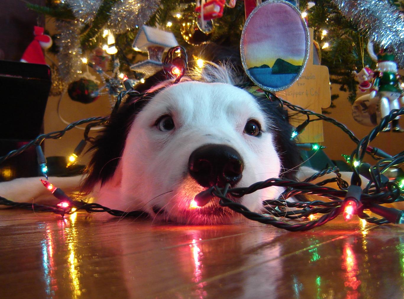 Perro con luces de Navidad