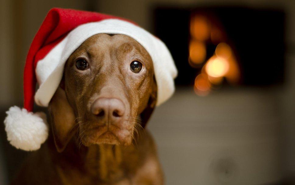 navidad sin peligros perros
