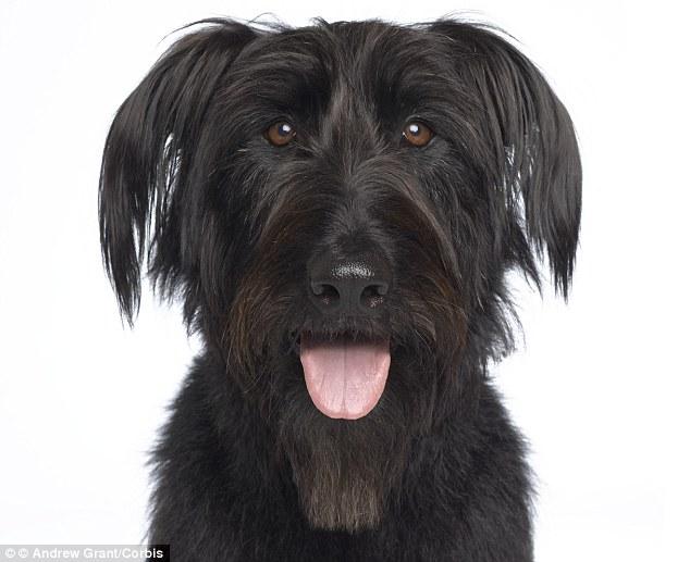 perro negro 2