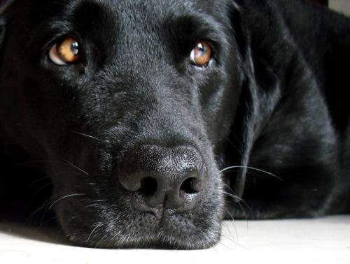 perro negro 3