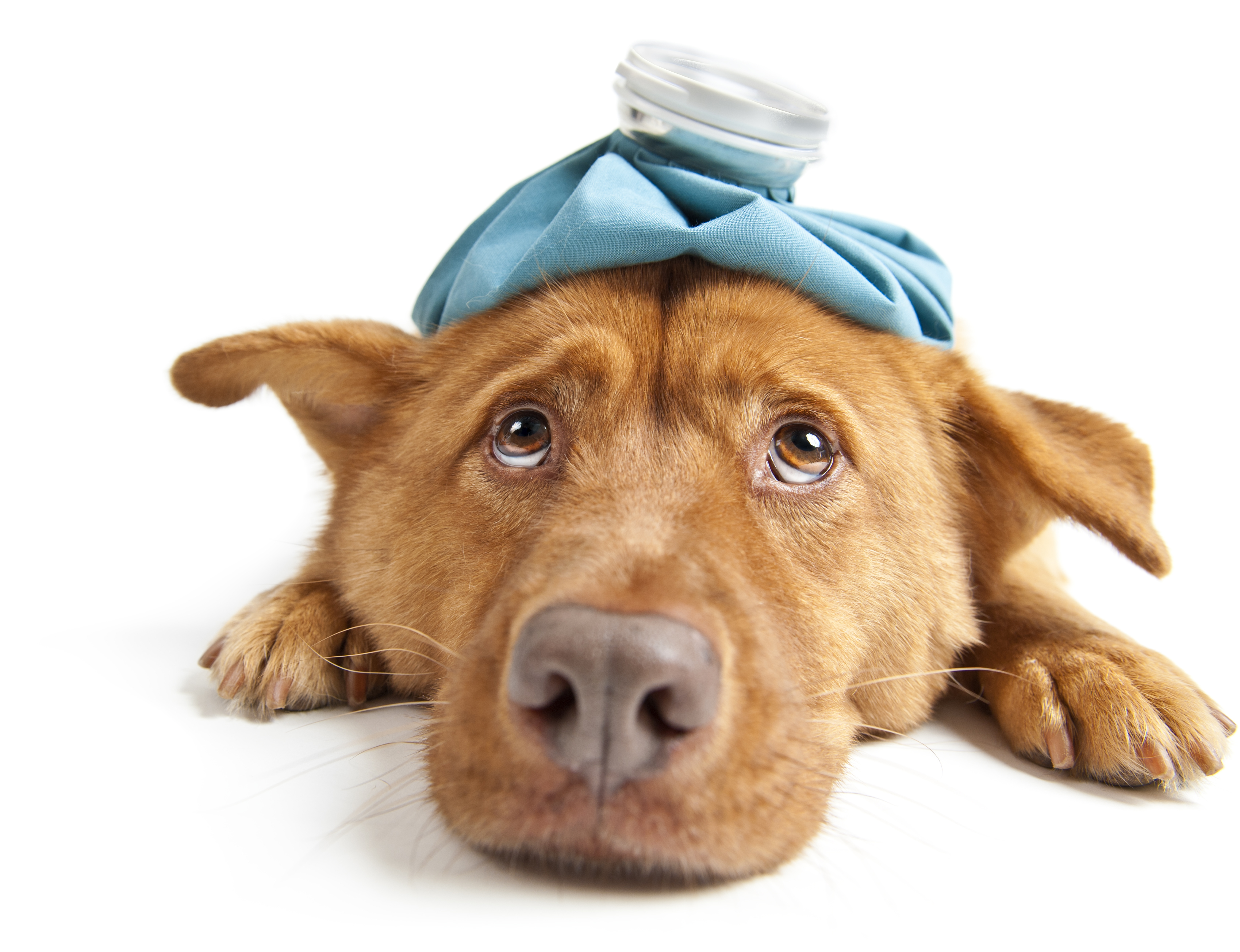 Primeros auxilios para perros maniobra de heimlich y for You are hot pictures