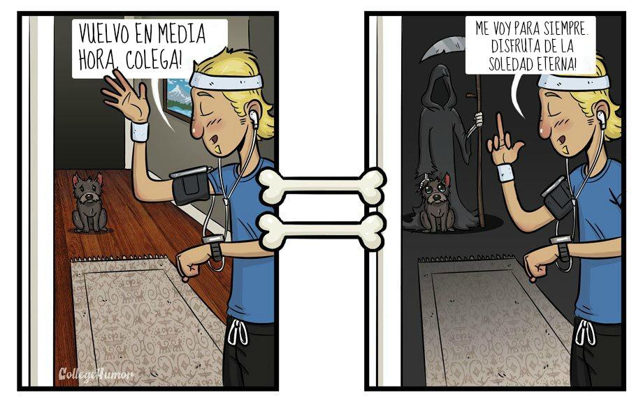 perro_abandono