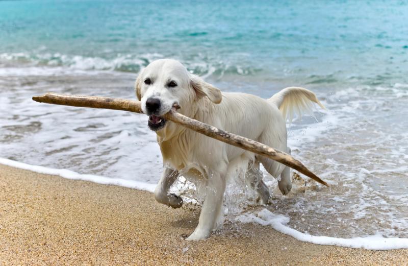 perro-palo-jugando-playa