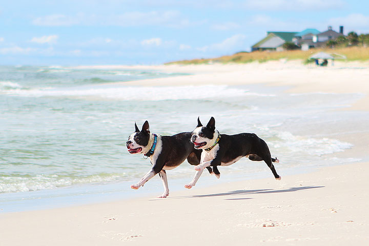 pet-friendly-off-leash-dog-beach-vacation-cape-san-blas-florida-panhandle-1