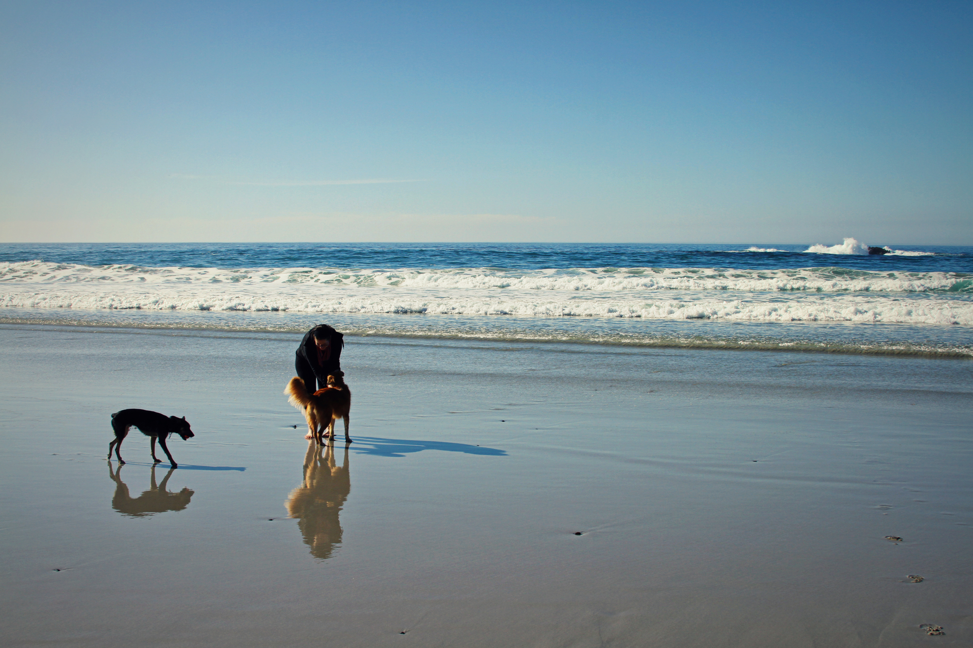 la-mejor-playa-de-perros-estara-en-alicante