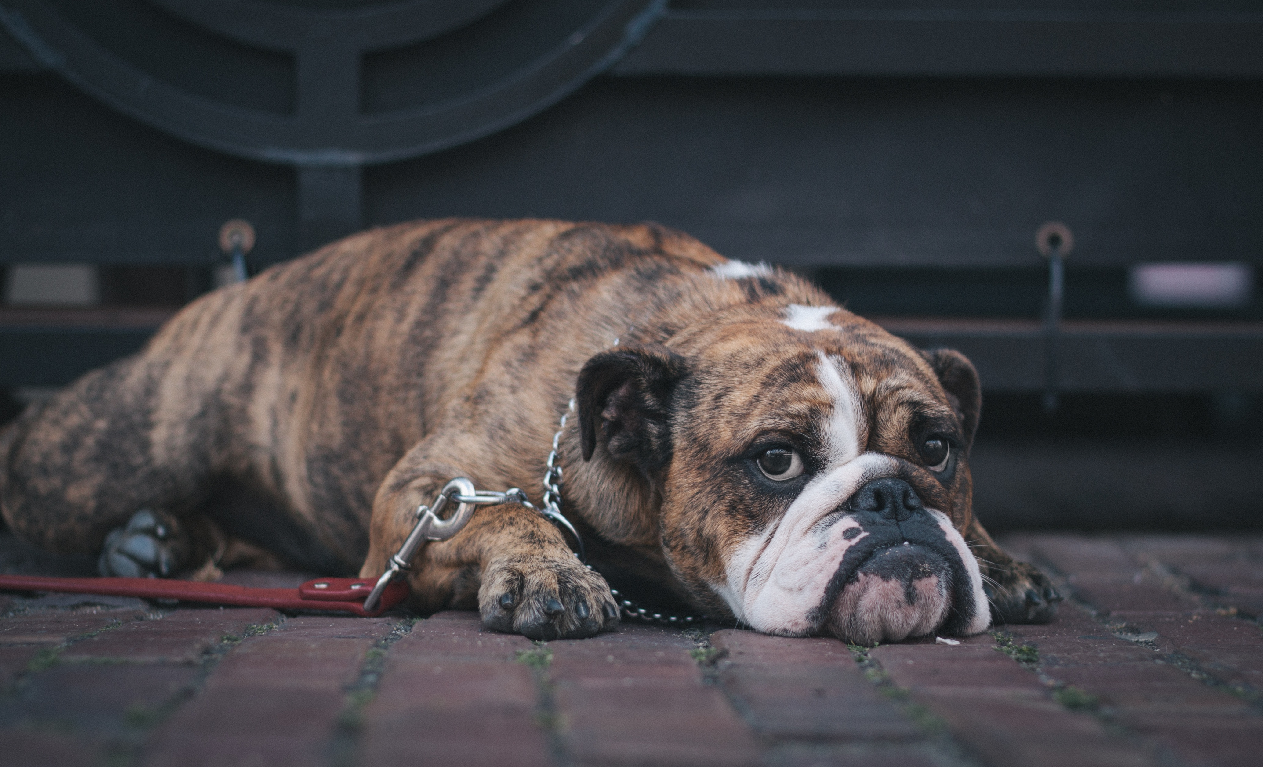 ¿Dónde dejo a mi perro en vacaciones de Semana Santa?