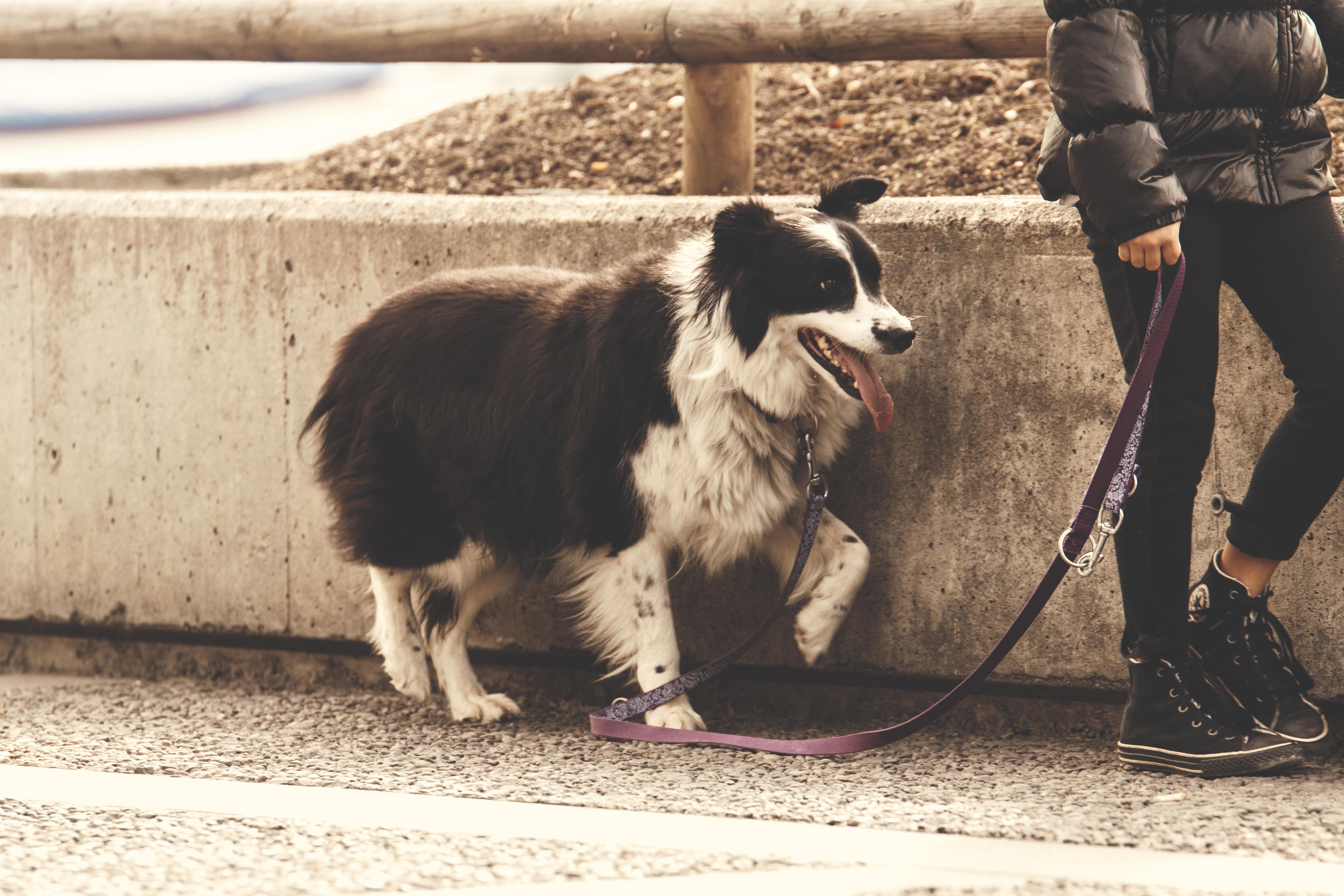 paseo-perro