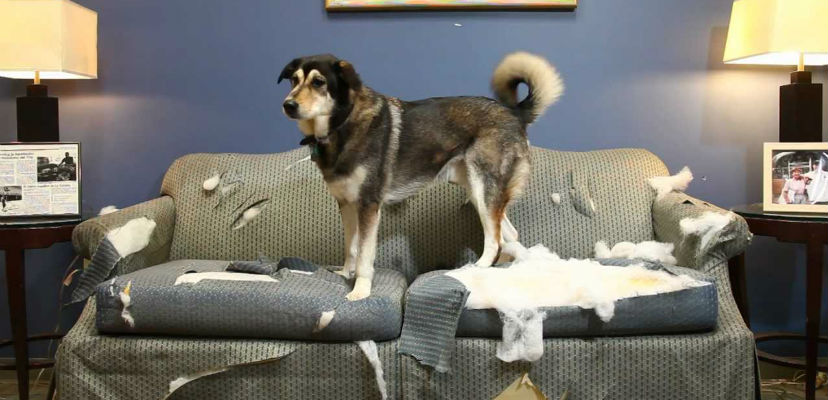 Cámaras de vigilancia para perros - Gublog