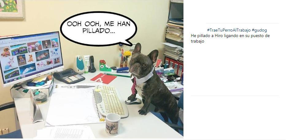 trae tu perro al trabajo 2017