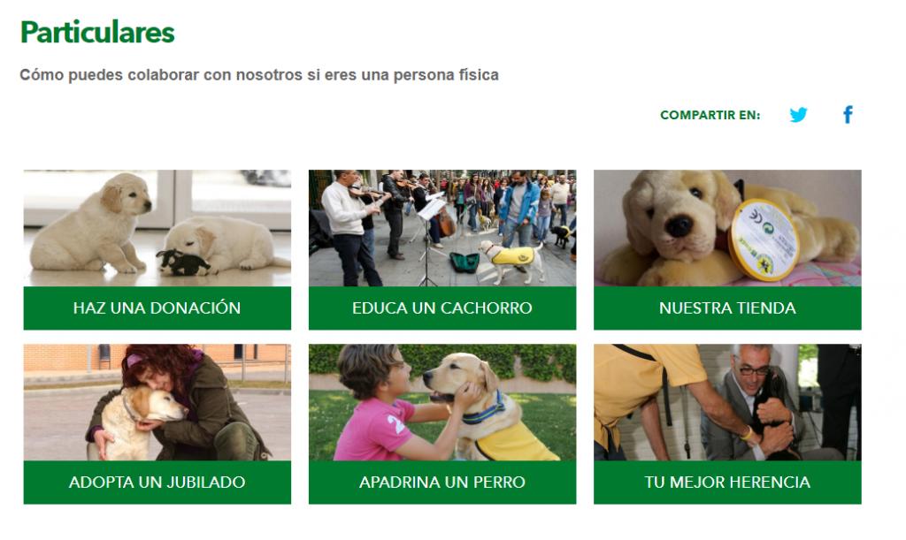 colaborar con la fundación once del perro guía