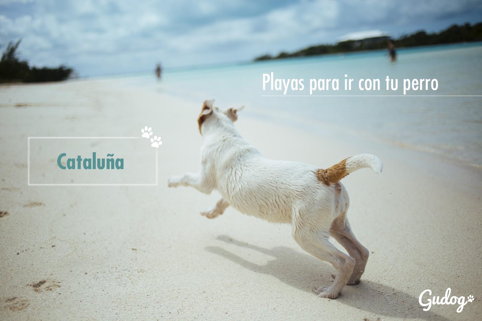 playas para perros cataluña