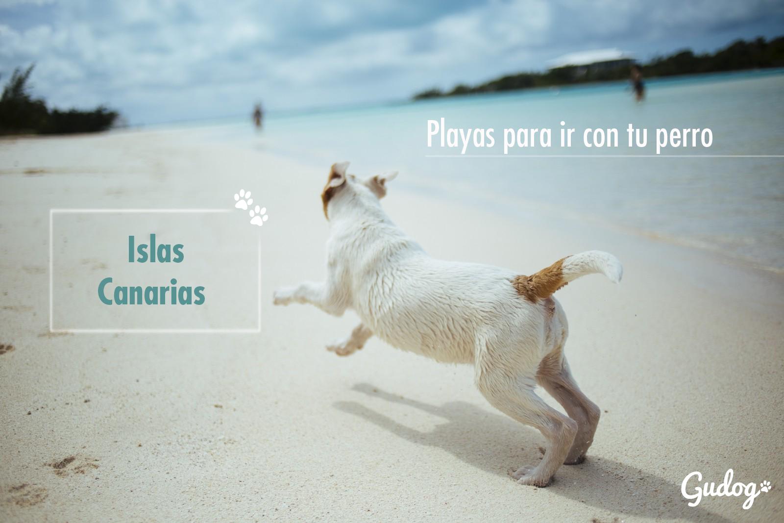 playas para perros islas canarias