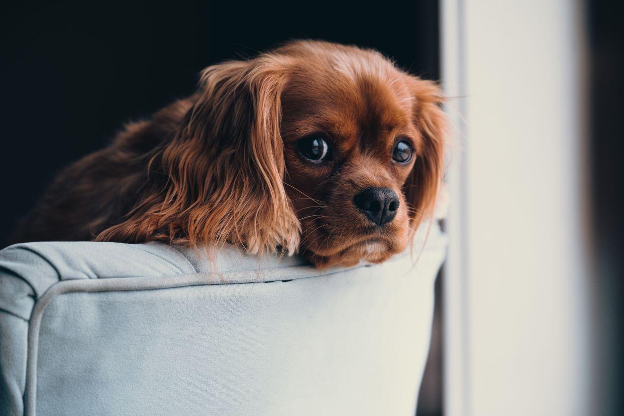 tu perro pasa demasiado tiempo solo
