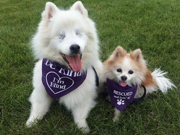 un perro ciego y su amigo: hoshi y zen the fluffy duo