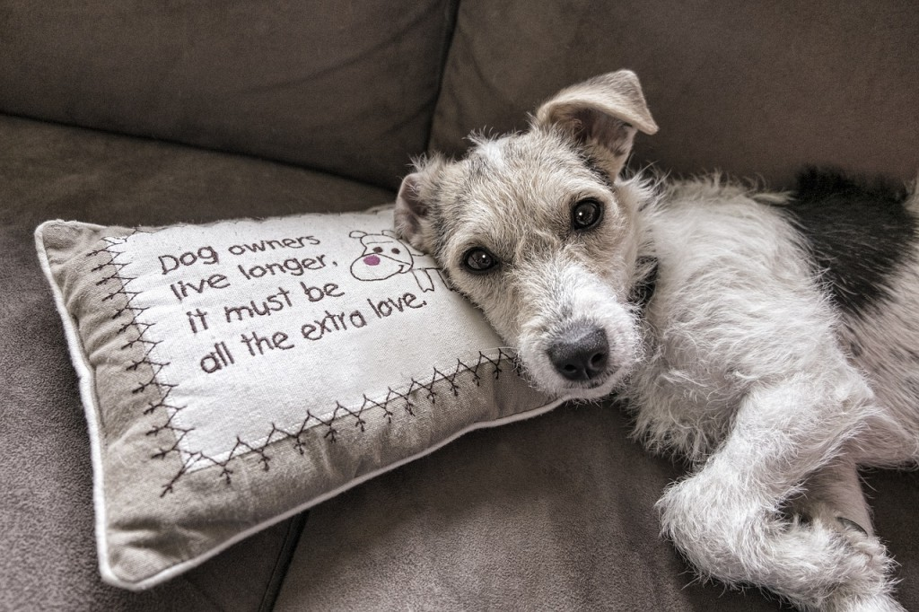 alergia a mi perro sofa