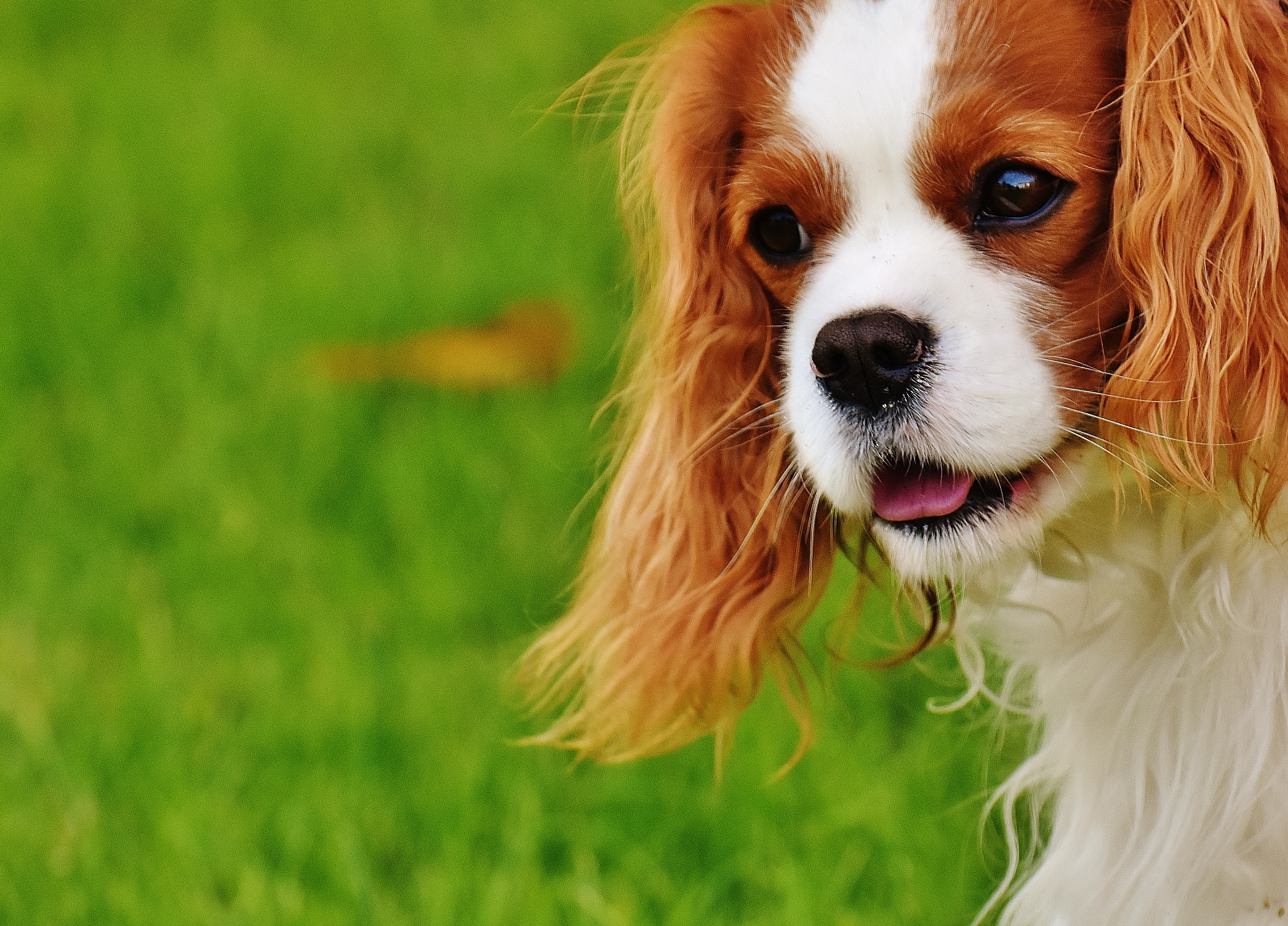alergia a perro