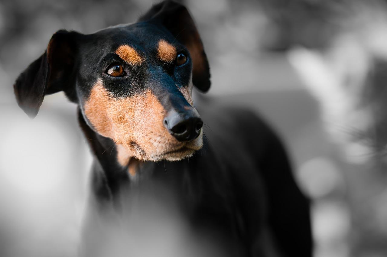perro muerde gudog