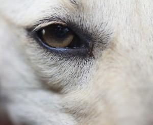 Fotos detalle perro Gudog