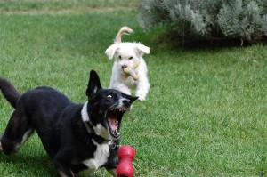 perro jugando no come gudog