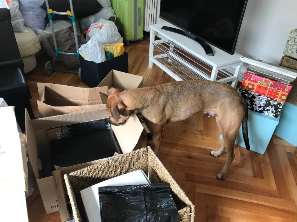 perro mudanza preparativos
