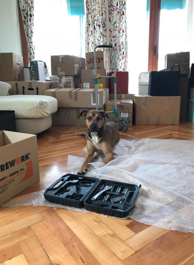 mudanza perro herramientas