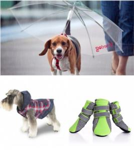 Accesorios paseo perro lluvia