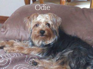 Nombre de perro en O Odie
