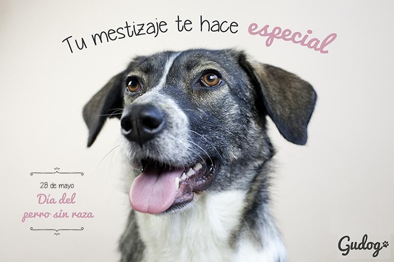 28 de mayo día del perro sin raza 2018