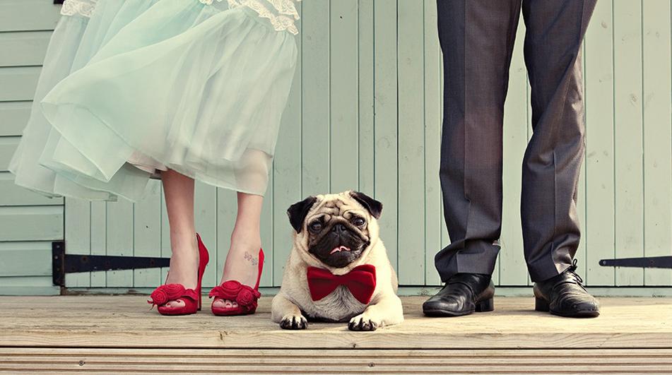 tu perro en tu boda