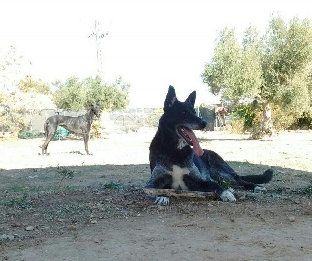 ser voluntario en una protectora de animales nueva vida adopciones