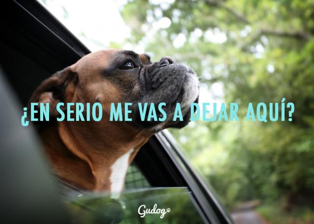 dejar perro en el coche cuidar tu perro este verano