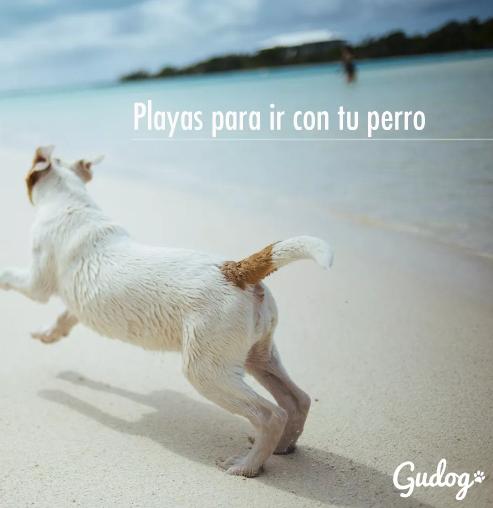 Playas para perros cuidar de tu perro este verano