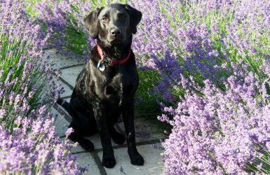 remedios naturales para perros