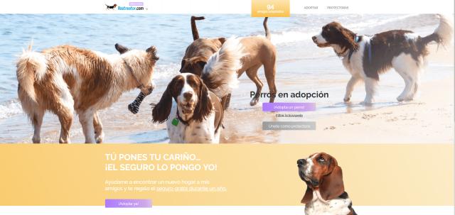 las razones del abandono adoptar perro