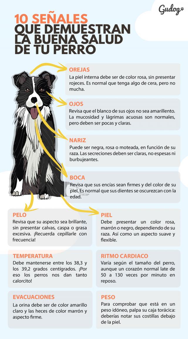 la buena salud de tu perro en 10 puntos