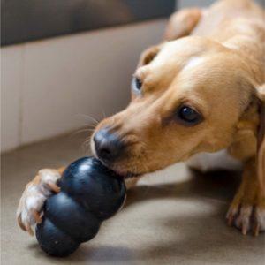juguete rellenable perro ansiedad por separación MercadoLibre.com.ar