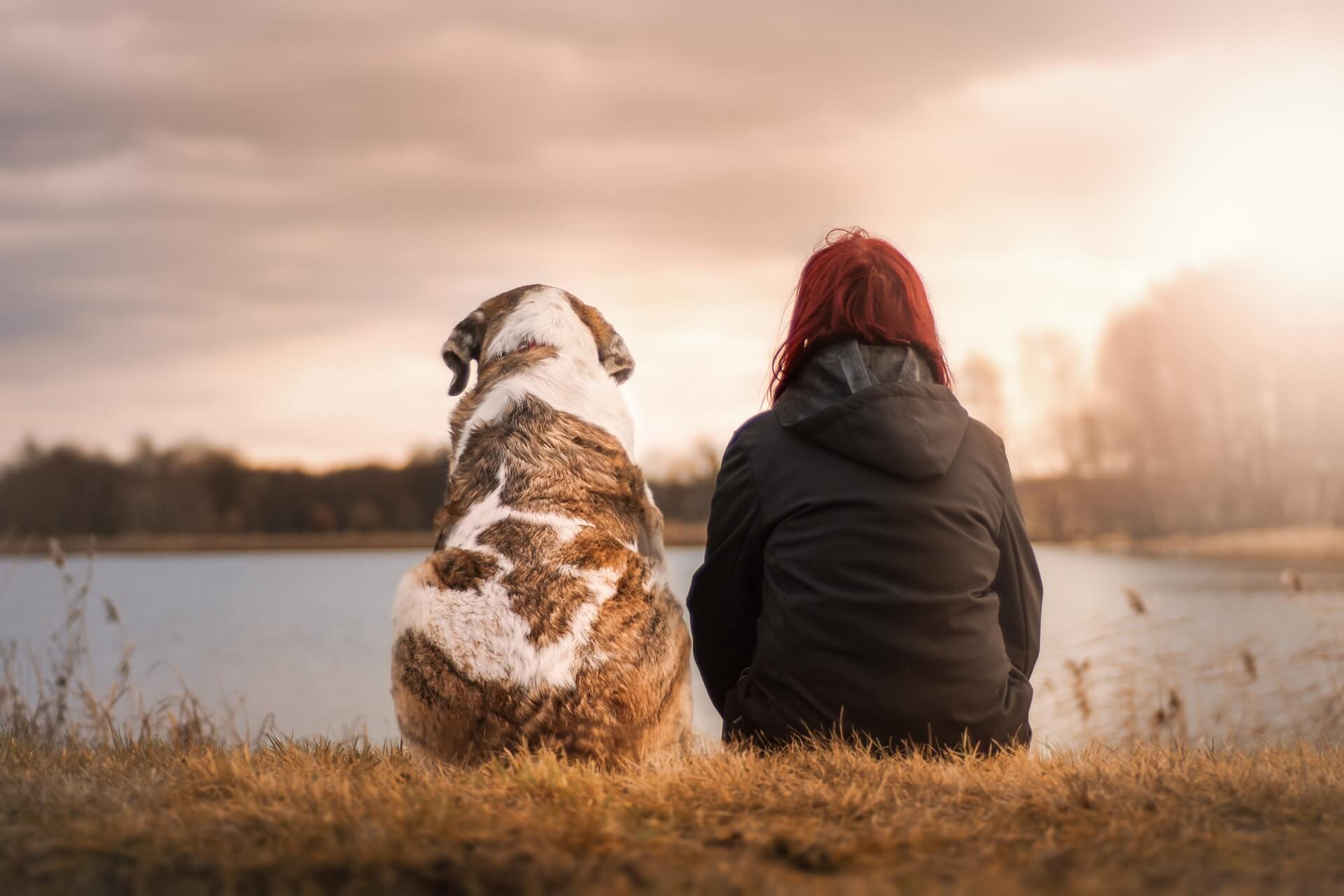 ¿Qué hago si encuentro un perro abandonado?