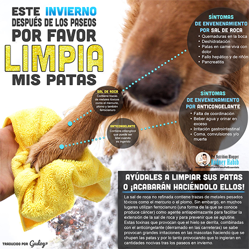 limpiar almohadillas de perro