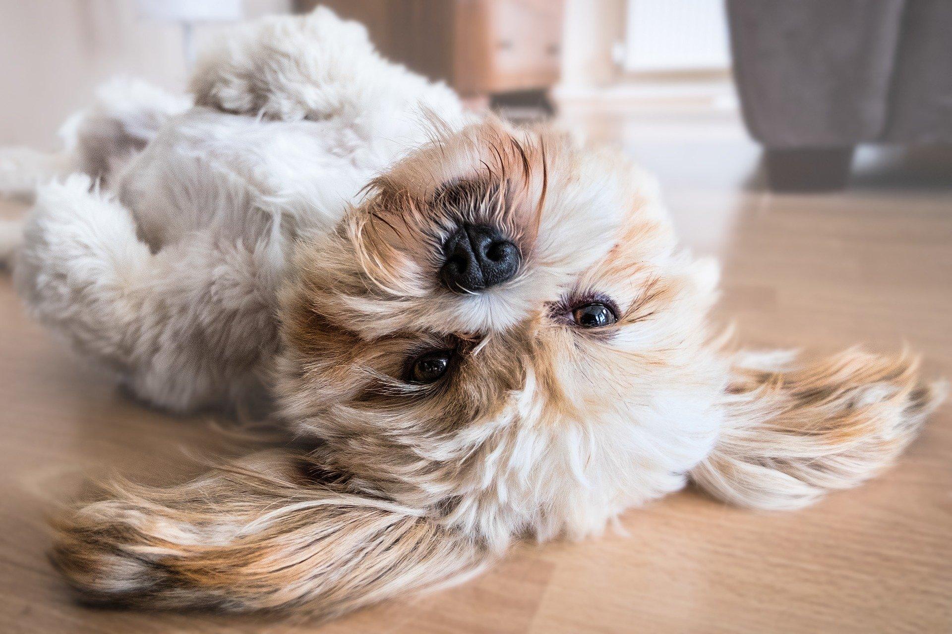 Perro juguetón
